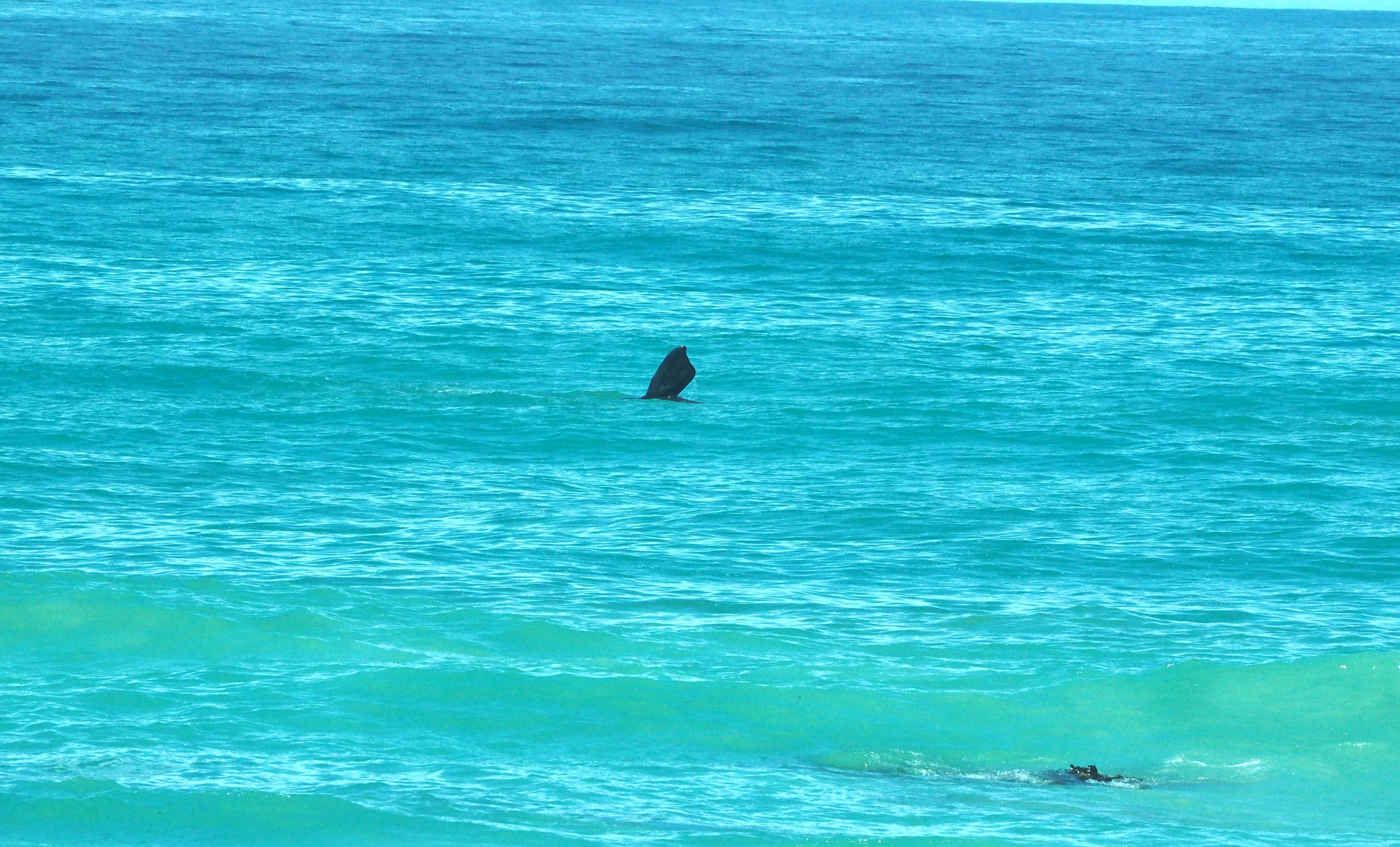 Springende walvissen en enge wandelingen